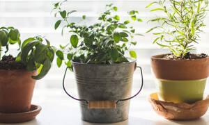 Πώς να καλλιεργήσεις μόνη σου τα λαχανικά και τα μυρωδικά που χρησιμοποιείς στο φαγητό σου