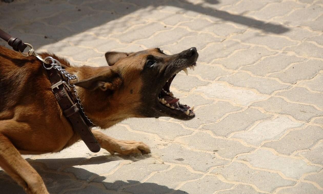 Άγρια επίθεση σκύλου σε 11χρονο αγοράκι στην Εύβοια: «Κοντέψαμε να χάσουμε το παιδί μας»