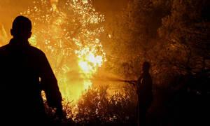 Οριοθετημένη η δασική πυρκαγιά στον Διόνυσο - Μεγάλη κινητοποίηση της Πυροσβεστικής (pics&vid)
