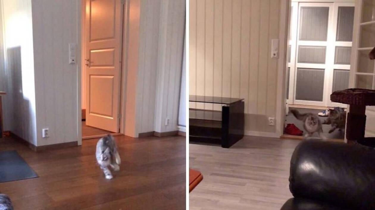 Βάλε στη γάτα σου φαγητό να δεις αντίδραση! (vid)
