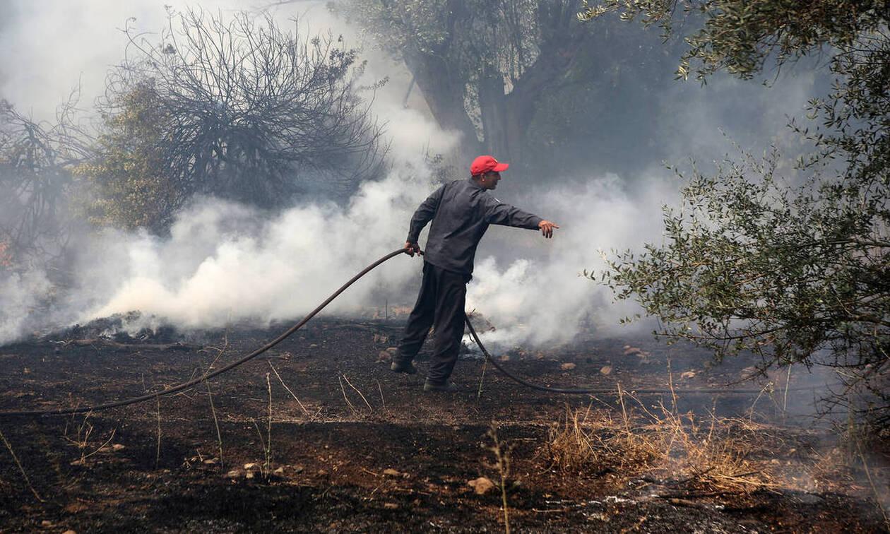 Φωτιά ΤΩΡΑ: Πυρκαγιά σε εξέλιξη στη Βάρδα Ηλείας