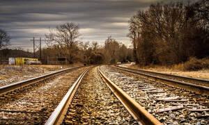 Απίστευτο περιστατικό στην Αλεξανδρούπολη: Βουβάλια συγκρούστηκαν με... τρένο