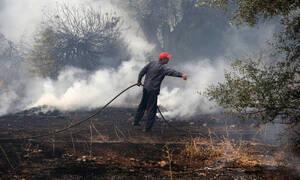 Φωτιές Ηλεία: Μανιακός εμπρηστής στα χέρια της ΕΛ.ΑΣ.