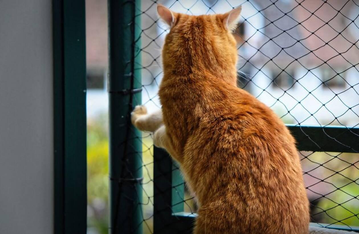 Απίστευτο και όμως αληθινό: Γεννήθηκε γάτα με 8 πόδια και 4 αυτιά - Σκληρές εικόνες