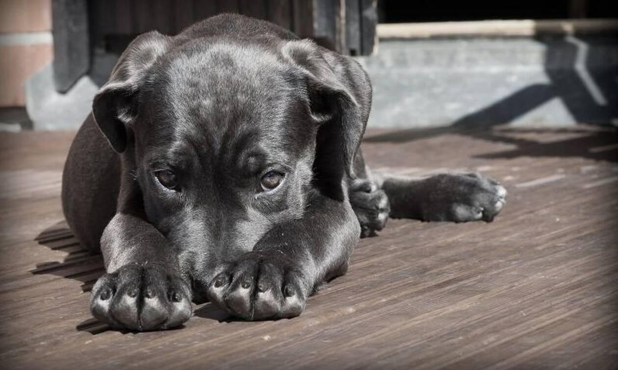 Κρήτη: Σκύλος έφαγε αυτό και παραλίγο να πεθάνει - Σώθηκε από θαύμα