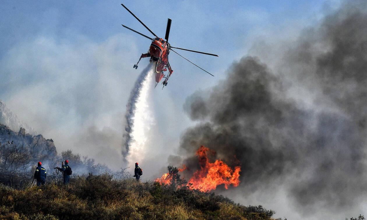Φωτιά ΤΩΡΑ στον Μαραθώνα - Μάχη με τους ισχυρούς ανέμους δίνουν οι πυροσβέστες