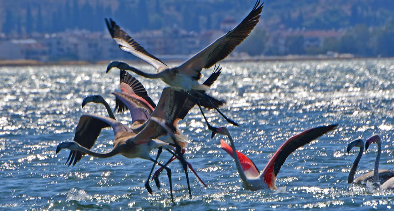 flamingo-photo-bomb-3.jpg