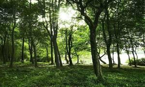 На Кипре вдоль дорог посадят 10 млн деревьев