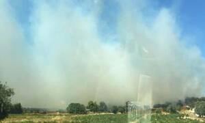 Φωτιά στην Αρτέμιδα: Ενισχύθηκαν οι δυνάμεις της Πυροσβεστικής