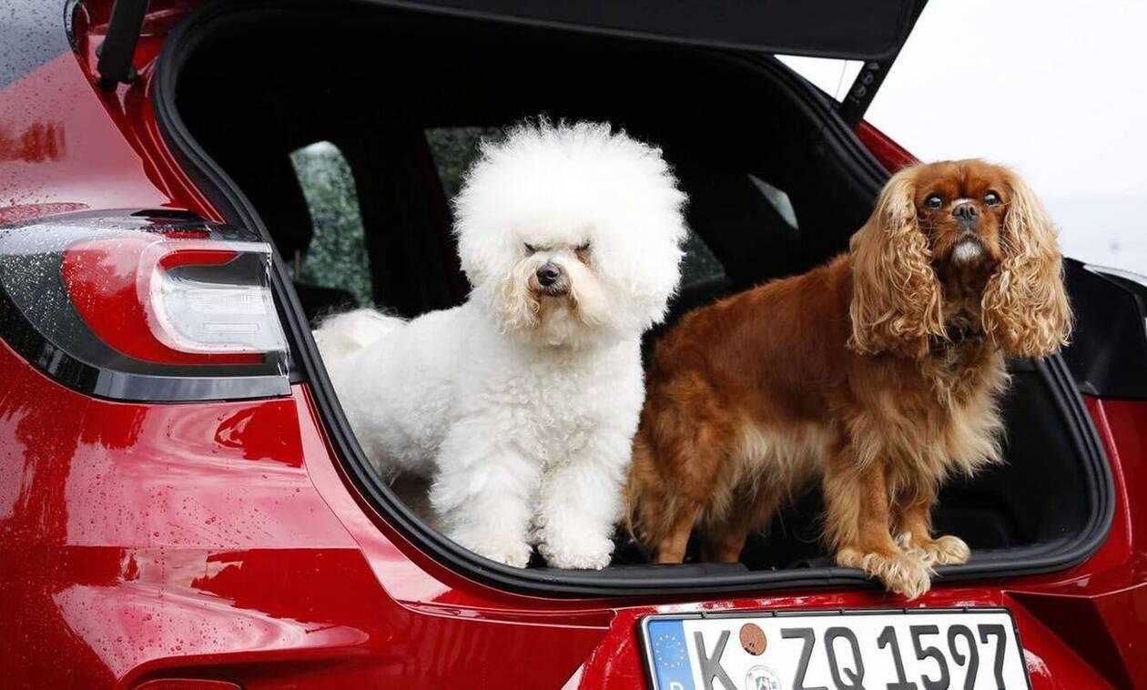 Nέο Ford Puma: και με… μπάνιο για τον σκύλο σας (vid)