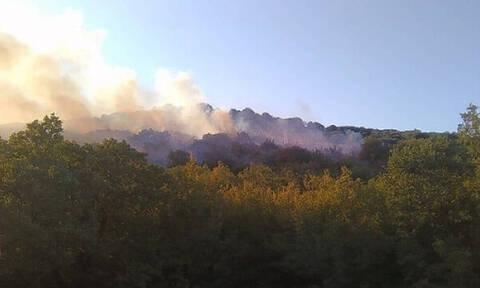 Φωτιά ΤΩΡΑ στο Κιλκίς - Ενισχύονται οι δυνάμεις της Πυροσβεστικής