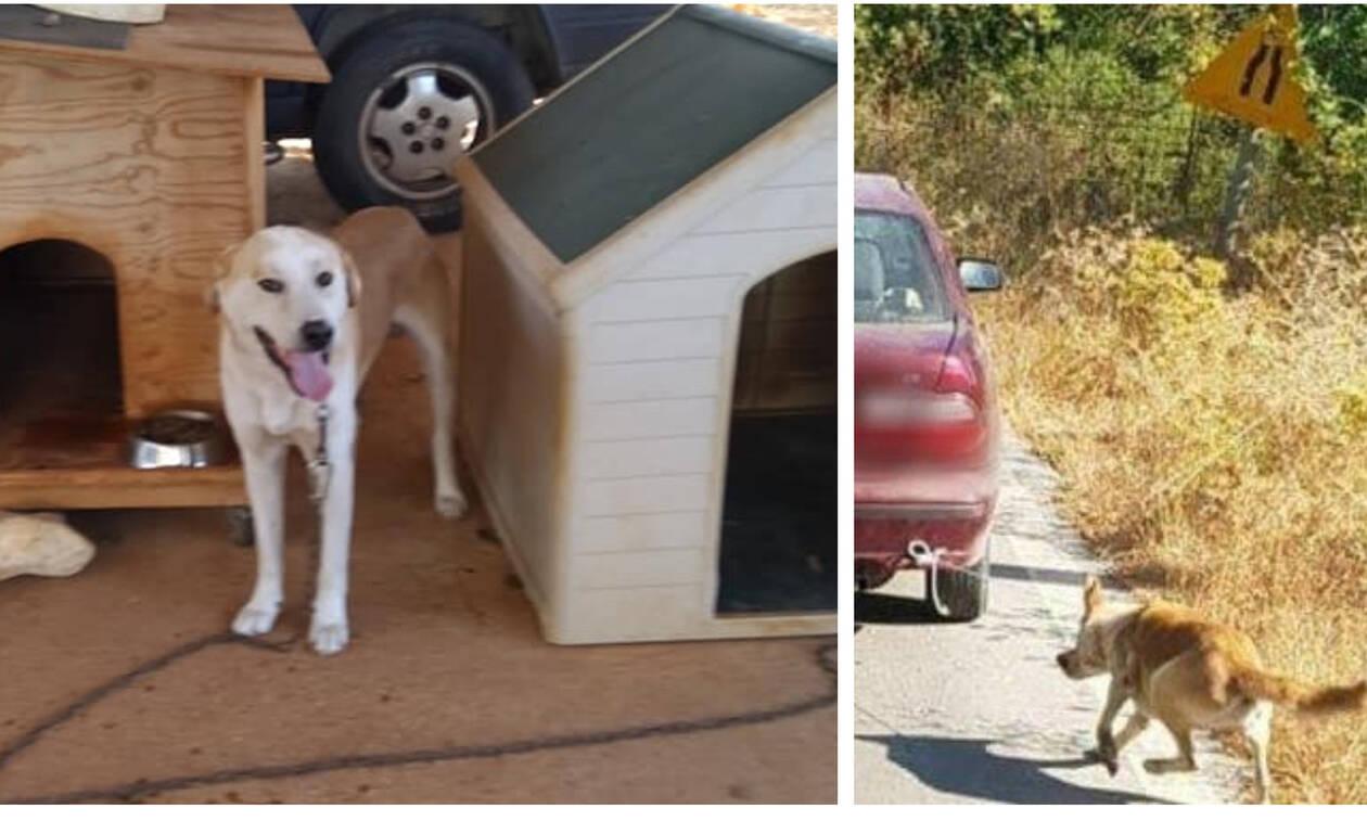 Ρέθυμνο: «Δεν τον έσερνε, τον έσωσε» λέει μάρτυρας για τον οδηγό που έδεσε σκύλο στο αυτοκίνητό του