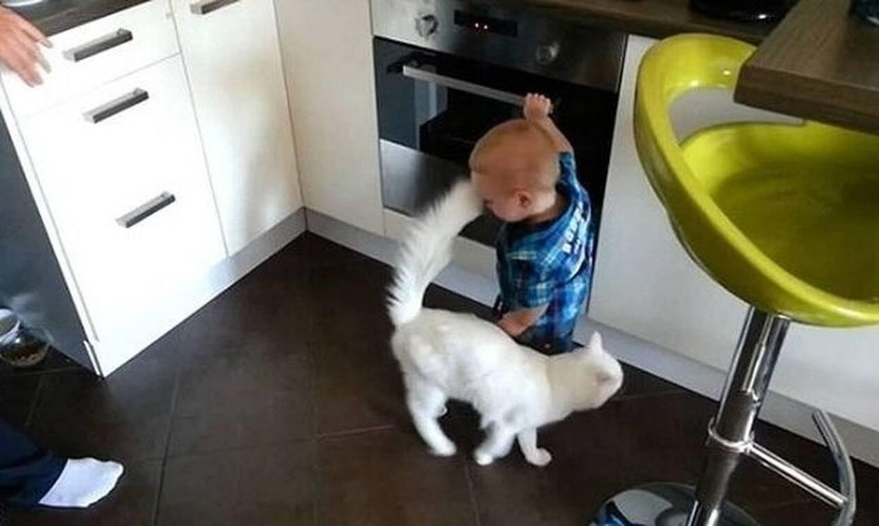 Δείτε τι κάνει η γάτα όταν ο πιτσιρικάς πατάει τα κουμπιά του φούρνου (vid)