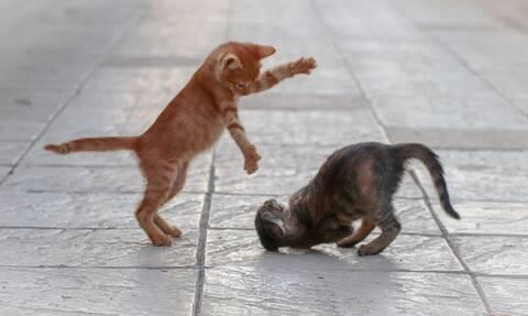 Δείτε τι συμβαίνει όταν μια γάτα βλέπει... κάλτσα μωρού (vid)