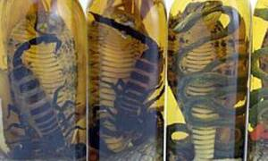 Σκέτη τρέλα: Πίνουν αλκοόλ φτιαγμένο από σκορπιούς και φίδια! (vid)