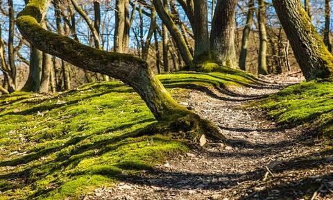 Δασικοί χάρτες: Δόθηκε νέα παράταση