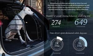 Πόσο επικίνδυνη είναι η μεταφορά κατοικίδιων ζώων στο αυτοκίνητο;