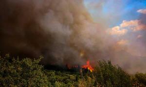 Μεγάλη φωτιά στη Φωκίδα: Επί ποδός οι Αρχές - Εν αναμονή εντολής για εκκένωση (pics&vid)
