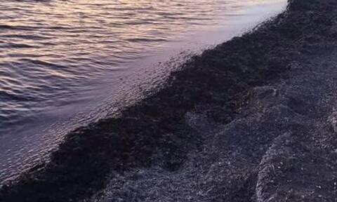 Εικόνες σοκ σε παραλία της Βούλας: Η θάλασσα γέμισε με λύματα (pics)