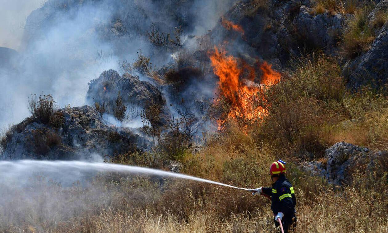 Συναγερμός στην Πυροσβεστική: Πυρκαγιά σε δασική έκταση στην Λαμία