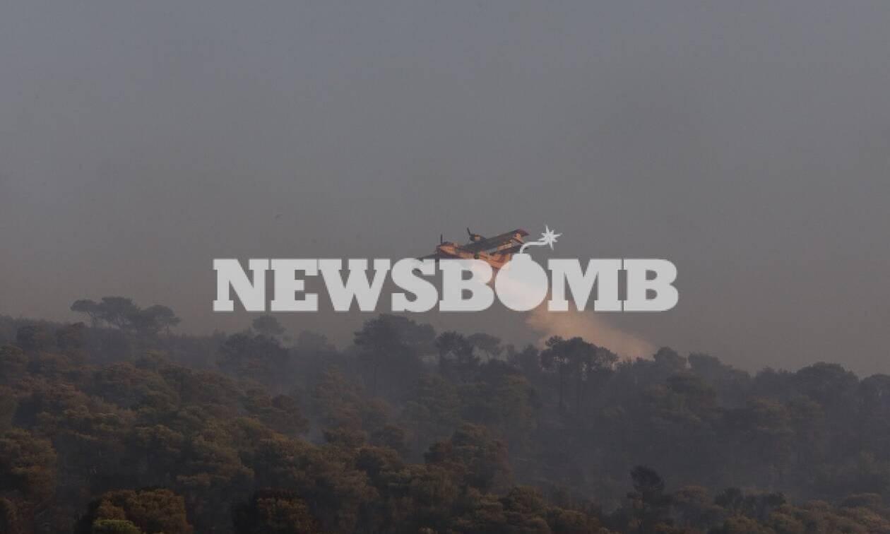 Φωτιά Νέα Μάκρη: Αυτό είναι το προφίλ του εμπρηστή