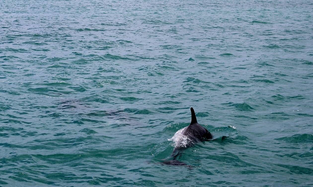 Εύβοια: Η στιγμή που η θάλασσα αφρίζει και συμβαίνει κάτι... άκρως εντυπωσιακό!