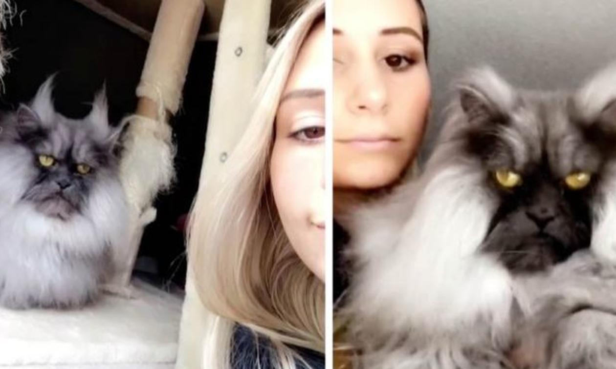 Γάτα ή «δαίμονας»; Δείτε την απάντηση στο βίντεο