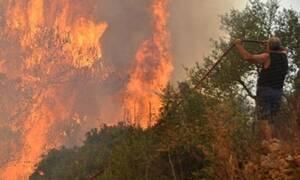Пожар на Закинфосе до сих пор не удалось взять под контроль