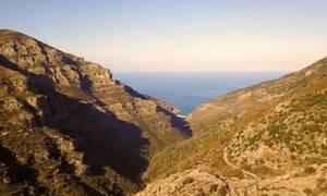 Χαμός στην Εύβοια: Απίστευτος «θησαυρός» σε βουνό - Δείτε τι βρήκαν