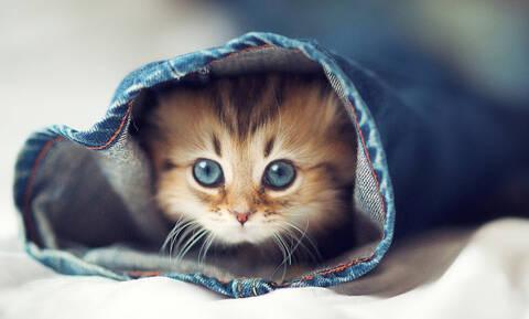 To ήξερες; Ποια ονόματα θέλουν να ακούν οι γάτες;