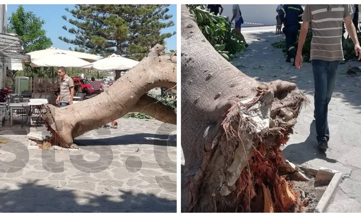 Πανικός στην Πάρο: Δέντρο έπεσε στην είσοδο της Εκατονταπυλιανής και πλάκωσε άνθρωπο (pics)