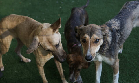 Αντιπεριφερειάρχης δέχθηκε επίθεση από σκυλιά