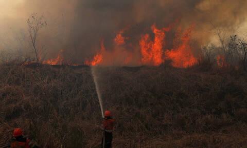 Όλεθρος: Τρομακτική η έκταση της αποψίλωσης στον Αμαζόνιο (pics+vids)