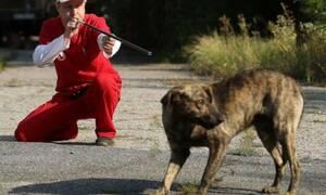 Τσέρνομπιλ: Δείτε πώς καθαρίζουν τα σκυλιά της περιοχής από τη ραδιενεργή σκόνη!