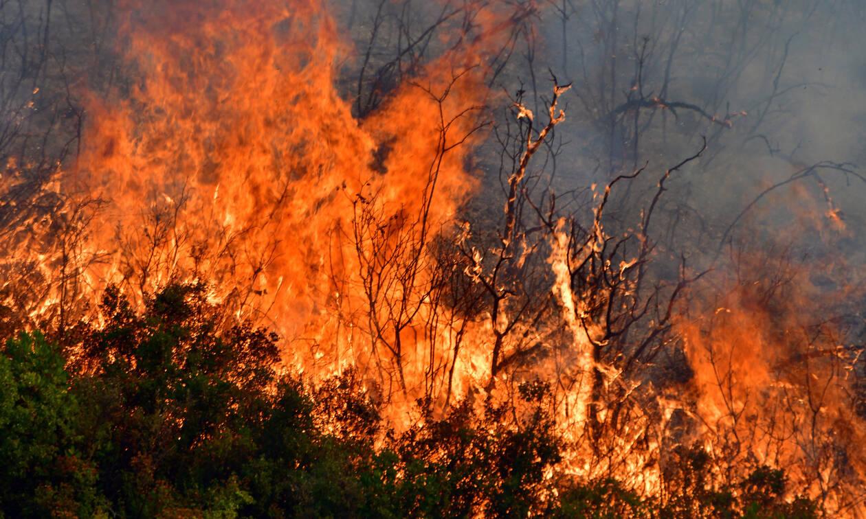Εύβοια: Βίντεο ντοκουμέντο – Η φωτιά κυκλώνει πυροσβεστικό όχημα