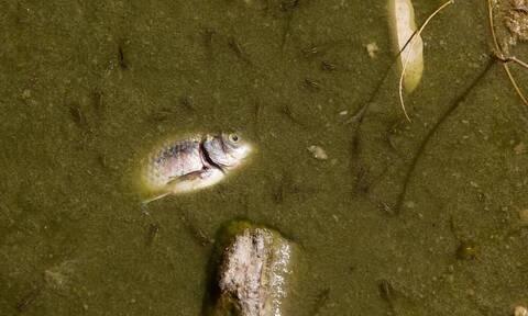 Εικόνες – σοκ στο Πάρκο Τρίτση: Νεκρά ψάρια και εγκατάλειψη