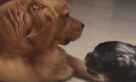 Τυφλός σκύλος υποδέχεται κουταβάκι στο σπίτι και «ραγίζει» καρδιές! (vid)