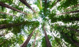 50 εκατομμύρια δέντρα φυτεύονται για να σώσουμε τον πλανήτη