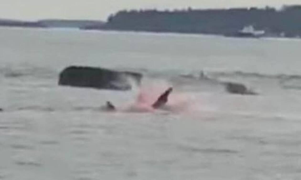 Η θάλασσα έγινε… κόκκινη από το αίμα - Τρομακτική επίθεση καρχαρία μπροστά στην κάμερα (vid)