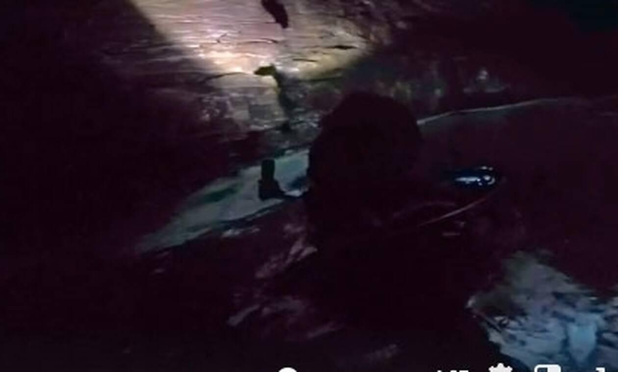 Εύβοια: Χαμός με τον θησαυρό που βρήκαν μέσα στη θάλασσα (vid)