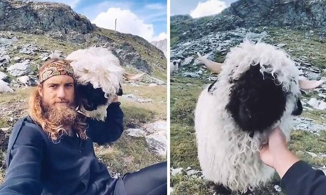 Μαλλιαρό πρόβατο συναντάει μαλλιαρό χίπη!