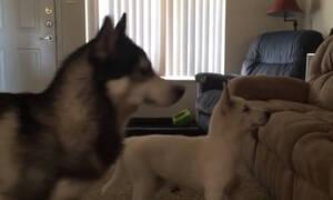 Κανείς δεν θέλει ΑΥΤΟΝ το σκύλο για φύλακα και ο λόγος είναι προφανής!