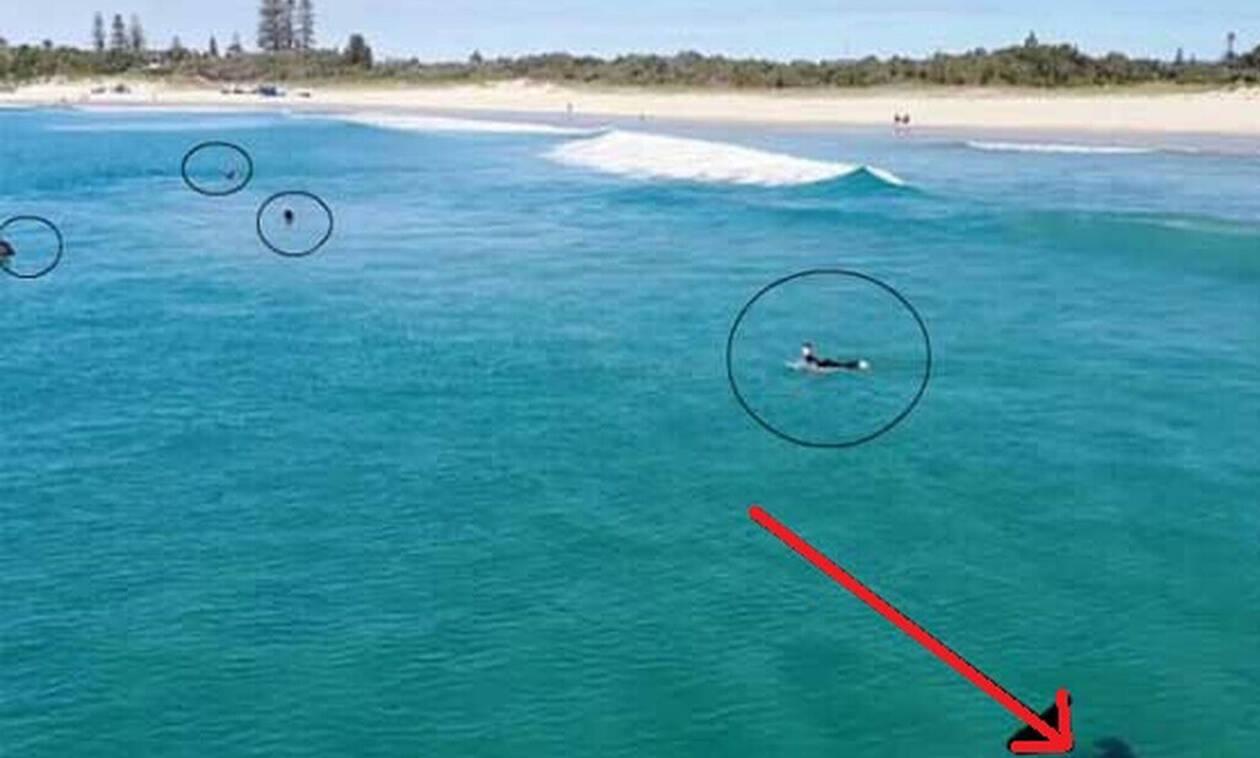 Ανατριχιαστικό: Κολυμπούν αμέριμνοι και δεν παίρνουν χαμπάρι τι είναι από κάτω τους! (vid)
