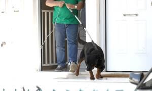 Τραγωδία στα Γλυκά Νερά: Αυτό είναι το σκυλί που κατασπάραξε το βρέφος (pics)