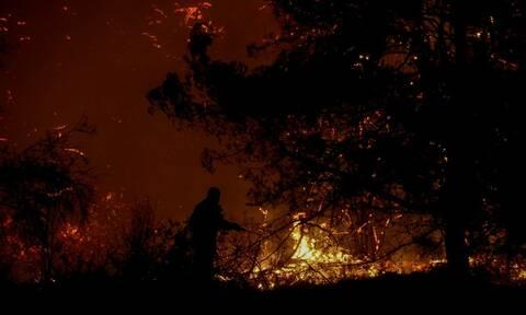 Μεγάλη φωτιά στον Πύργο Ηλείας: Συναγερμός στην πυροσβεστική