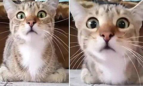 Αυτή η γάτα βλέπει θρίλερ και παθαίνει πανικό! (vid)