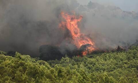 Φωτιά ΤΩΡΑ στη Ζάκυνθο: Ενισχύονται οι δυνάμεις στην πυρκαγιά στις Μαριές