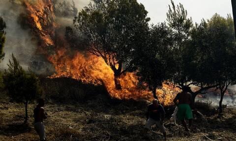 Φωτιά ΤΩΡΑ στη Θεσπρωτία