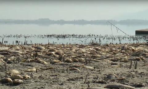 Η λίμνη Κορώνεια πεθαίνει: Έπεσε δραματικά η στάθμη του νερού - Χιλιάδες τα νεκρά ψάρια (vid)