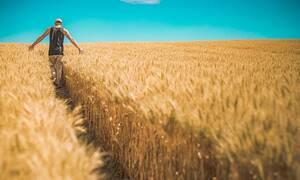 Ποιοι θεωρούνται ως «ενεργοί αγρότες» και δικαιούνται επιδότηση
